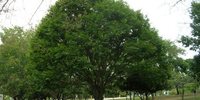 اهمية المناطق الخضراء في المدن كلية الاداب جامعة الكوفة