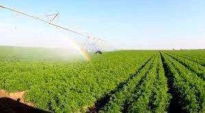كلية الآداب تنظم ورشة عمل عن تدهور الإنتاج الزراعي في النجف الأشرف